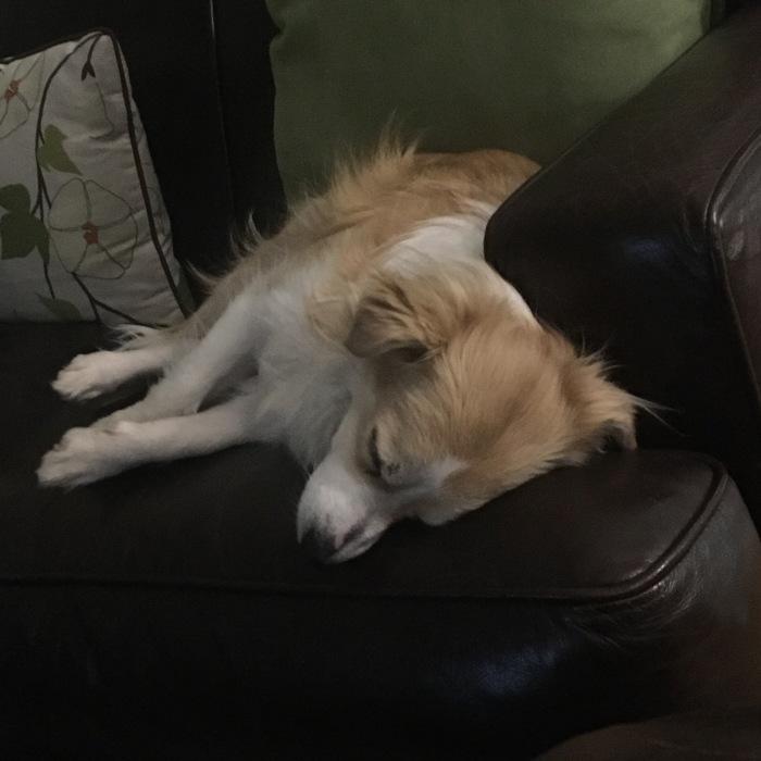 Joey Sleeping 2 IMG_7380